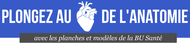 Visuel lien catalogue collection d'anatomie