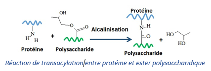 Réaction de transacylation