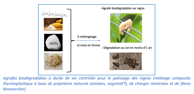 Agrafes biodégradables