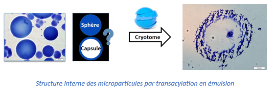 Structure interne des microparticules