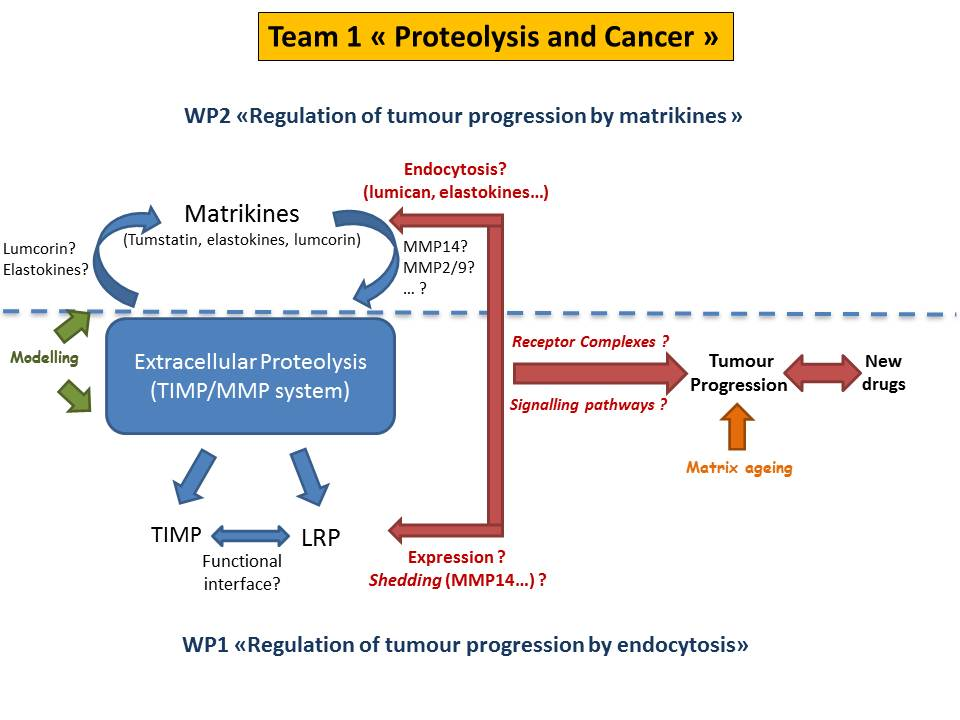 Team 1 proteolysis and cancer - Universite reims champagne ardenne bureau virtuel ...